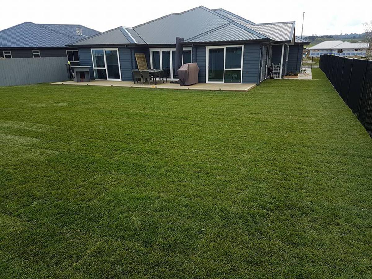 A lush green ready lawn